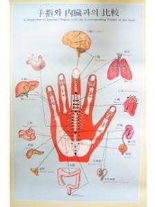 高麗手指鍼の頸椎椎間板ヘルニアのツボの図